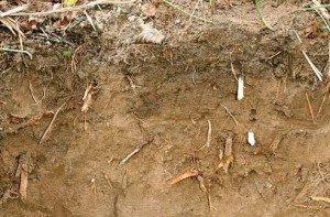 почва влажного климата