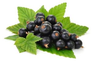листья и ягоды чёрной смородины