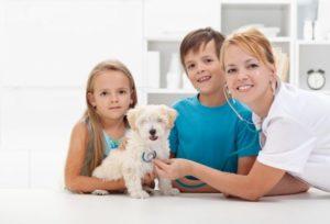 щенок на приёме у ветеринара