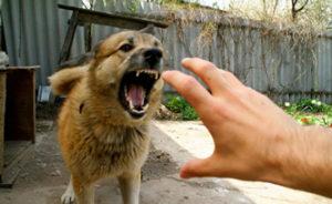 собака хочет укусить человека