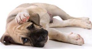плохое самочувствие у собаки