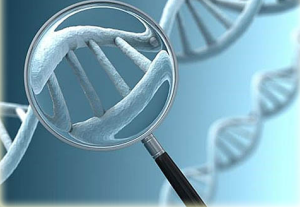 рисунок анализа ДНК