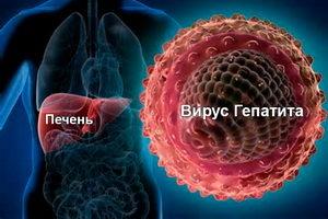 печень человека и вирус гепатита