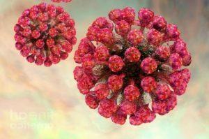 как выглядит вирус краснухи