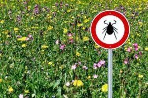 знак в поле предупреждающий о клещах