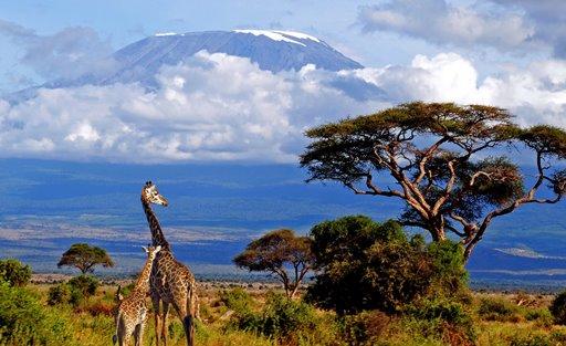 природа Танзании