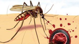 рисунок комара, кусающего человека