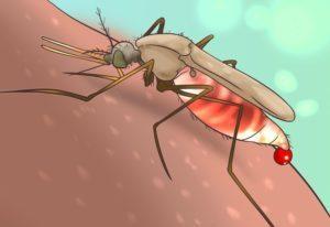 комар кусающий человека — рисунок