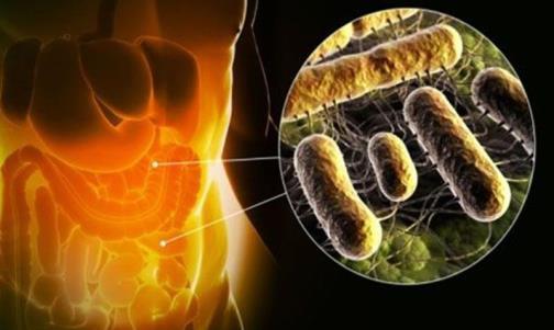 кишечник человека и бактерии в нём