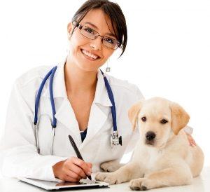 врач-ветеринар и собака