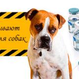 вакцины для собак