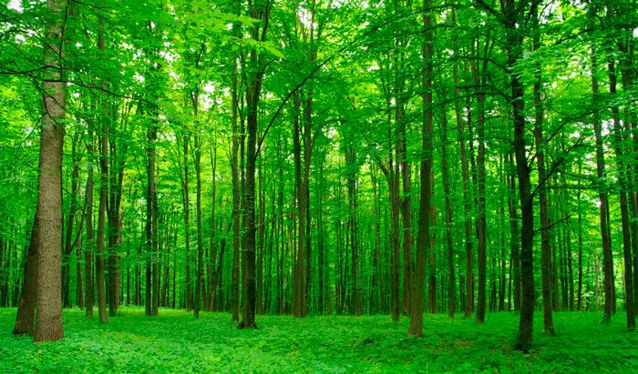 лиственный смешанный лес