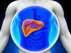 от гепатита B страдает печень