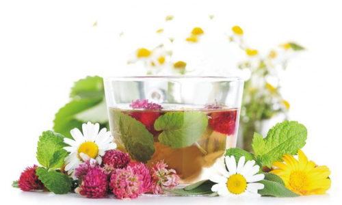 чашка с чаем и травы