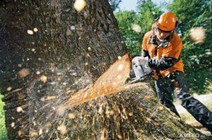 работы по лесозаготовке