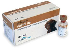 Прививки щенкам до года: таблица, вакцины, подготовка, осложнения