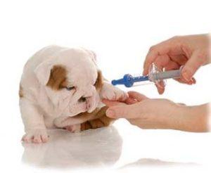щенку делают прививку