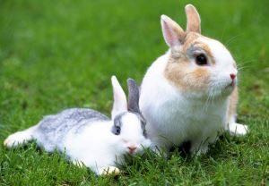 два кролика сидят на траве