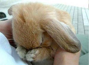 кролик плохо себя чувствует