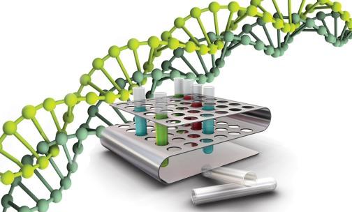 рисунок анализа ДНК при ПЦР диагностике