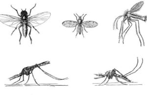 комары и мошки рисунок