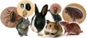 переносчики туляремии: кролики, мыши, белки и другие животные