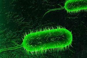 холерный вибрион под микроскопом