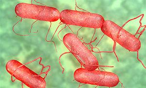 Salmonella — брюшнотифозная палочка