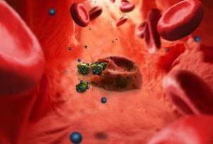 рисунок движения бактерий по кровотоку
