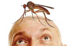 комар сидит на лбу человека