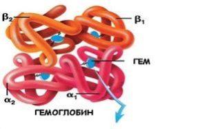как выглядит гемоглобин
